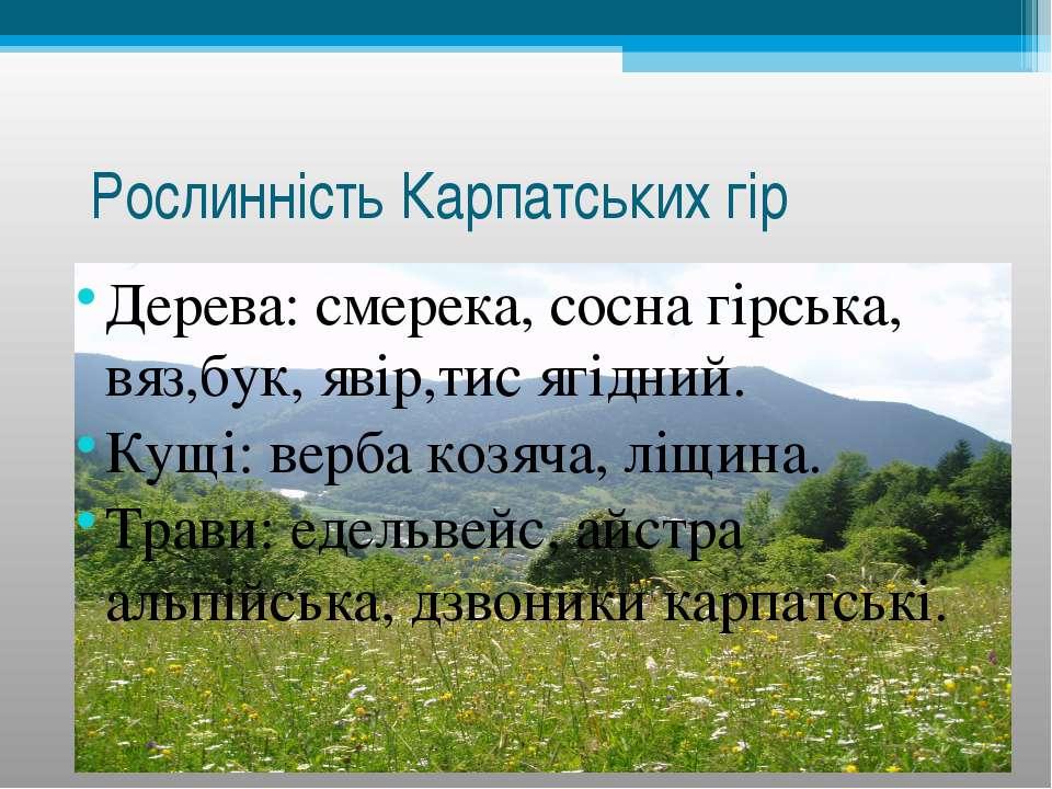 Рослинність Карпатських гір Дерева: смерека, сосна гірська, вяз,бук, явір,тис...