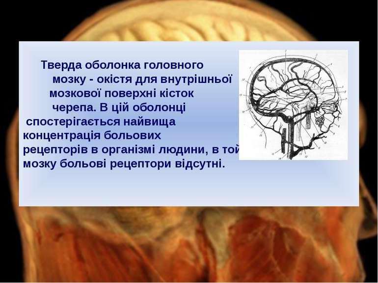 Тверда оболонка головного мозку - окістя для внутрішньої мозкової поверхні кі...