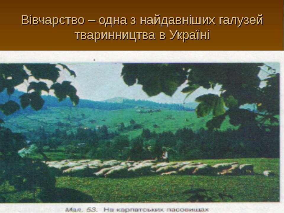 Вівчарство – одна з найдавніших галузей тваринництва в Україні