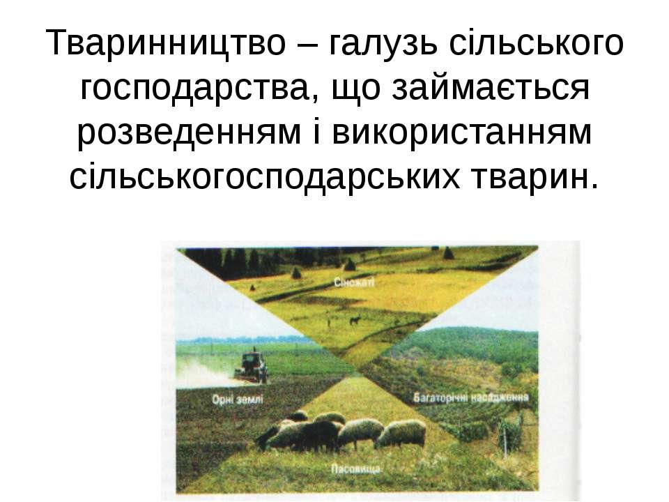 Тваринництво – галузь сільського господарства, що займається розведенням і ви...
