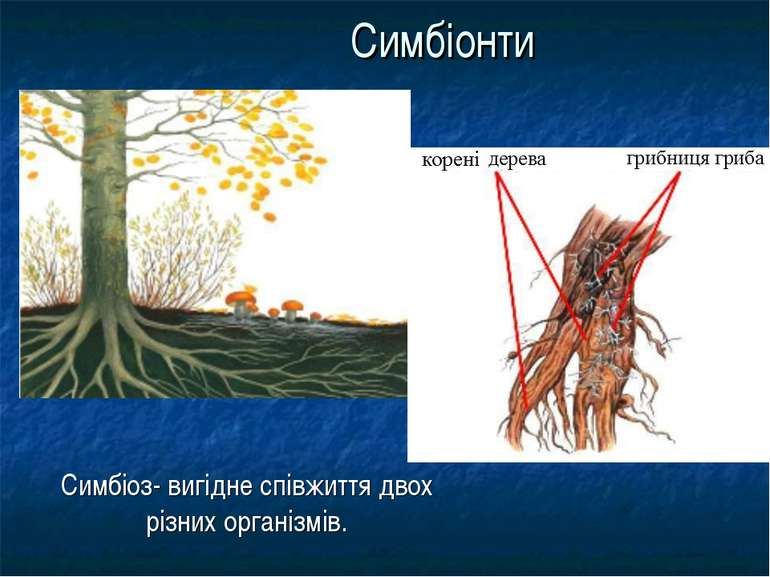 Симбіонти Симбіоз- вигідне співжиття двох різних організмів.