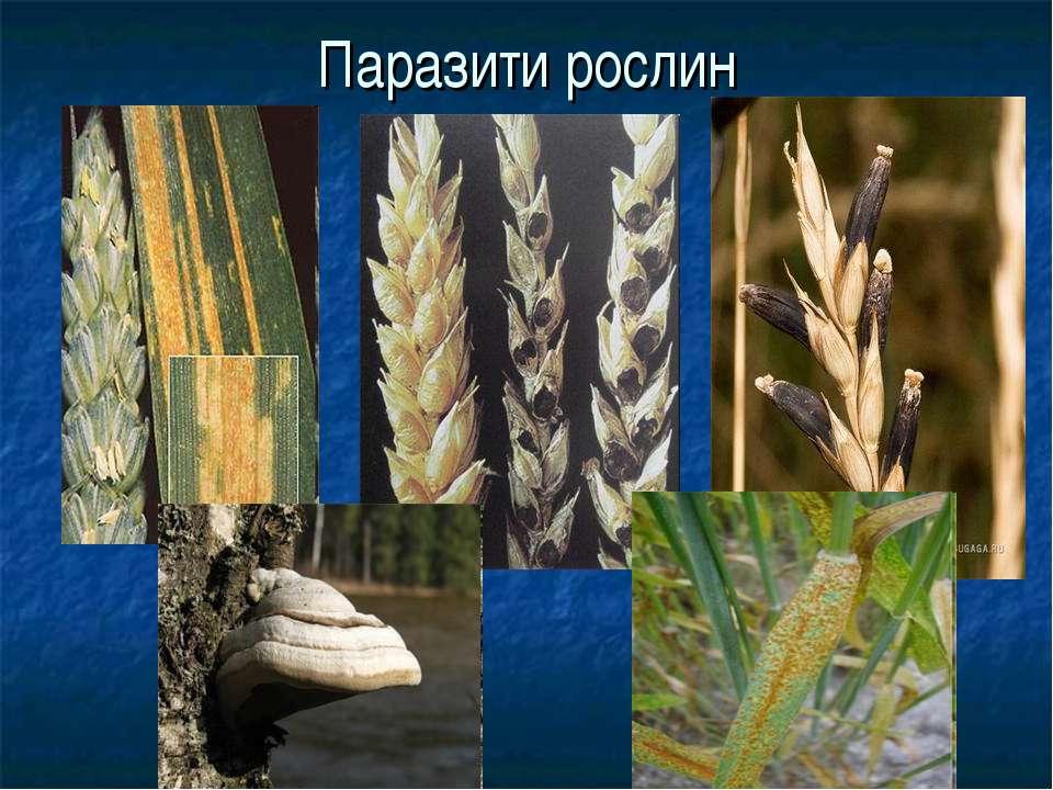 Паразити рослин