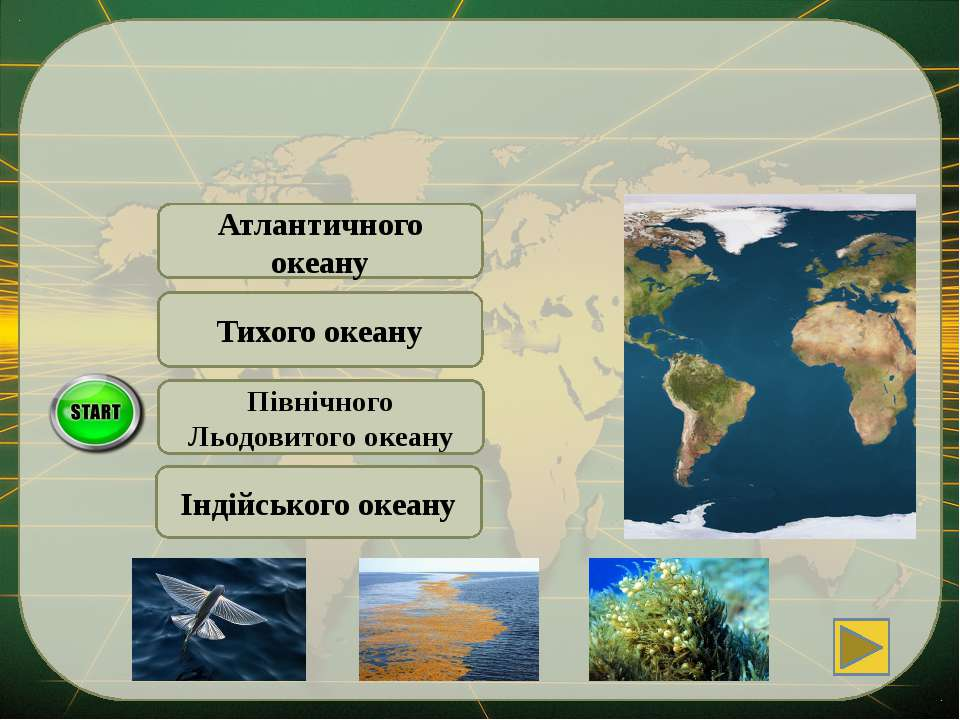 Індійського океану Атлантичного океану Серед водоростей … є саргасова водоріс...