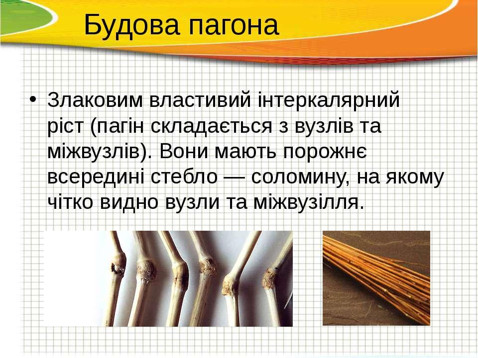 Злаковим властивий інтеркалярний ріст(пагін складається з вузлів та міжвузлі...