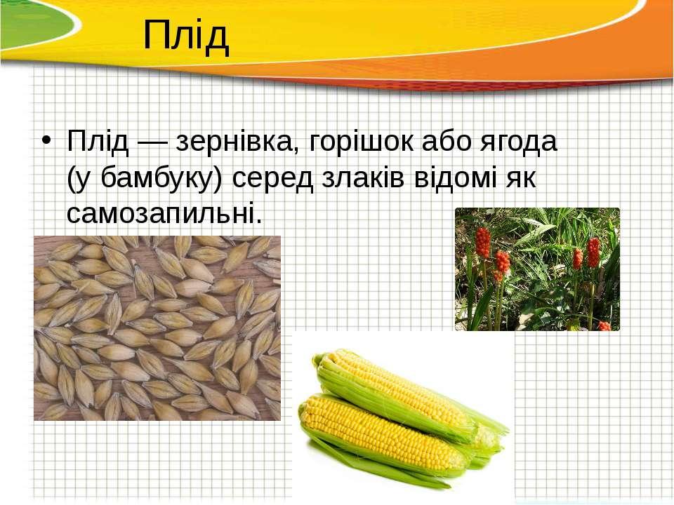 Плід—зернівка, горішок або ягода (убамбуку) серед злаків відомі як самозап...