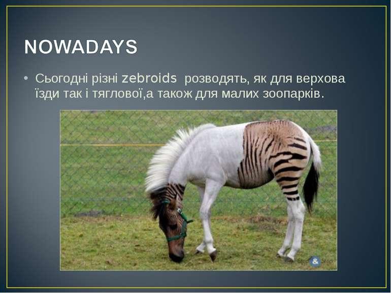 Сьогодні різні zebroids розводять, як для верхова їзди так і тяглової,а також...