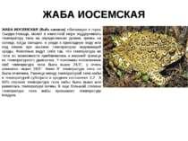 ЖАБА ИОСЕМСКАЯ ЖАБА ИОСЕМСКАЯ (Bufo canorus) обитающая в горах Сьерра-Невада,...