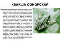 КВАКША СОНОРСКАЯ КВАКША СОНОРСКАЯ (Hyla eximia) маленькая квакша с заостренно...