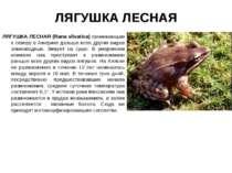 ЛЯГУШКА ЛЕСНАЯ ЛЯГУШКА ЛЕСНАЯ (Rana silvatica) проникающая к северу в Америке...