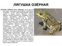 ЛЯГУШКА ОЗЁРНАЯ ЛЯГУШКА ОЗЁРНАЯ (Rana ridibunda) самый крупный вид среди земн...