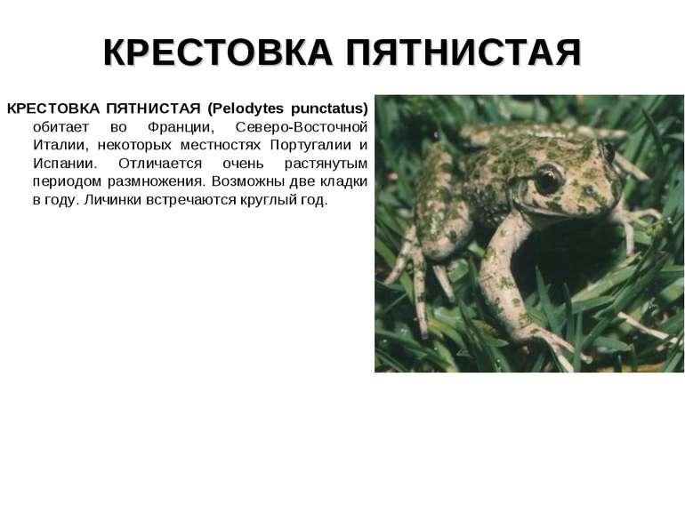 КРЕСТОВКА ПЯТНИСТАЯ КРЕСТОВКА ПЯТНИСТАЯ (Pelodytes punctatus) обитает во Фран...