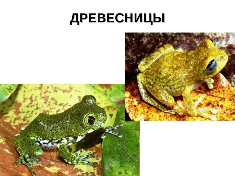ДРЕВЕСНИЦЫ