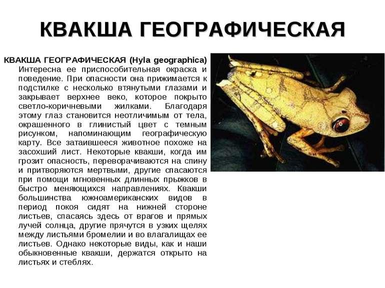 КВАКША ГЕОГРАФИЧЕСКАЯ КВАКША ГЕОГРАФИЧЕСКАЯ (Hyla geographica) Интересна ее п...