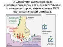3. Диффузия ацетилхолина в синаптической щели,связь ацетилхолина с холинореце...