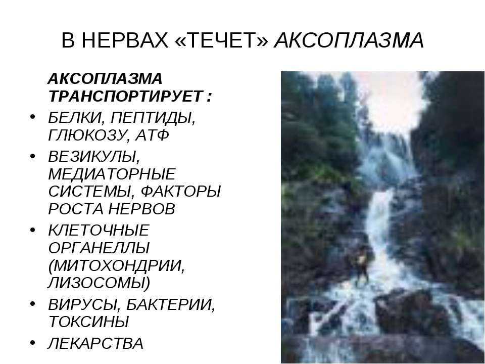 В НЕРВАХ «ТЕЧЕТ» АКСОПЛАЗМА АКСОПЛАЗМА ТРАНСПОРТИРУЕТ : БЕЛКИ, ПЕПТИДЫ, ГЛЮКО...