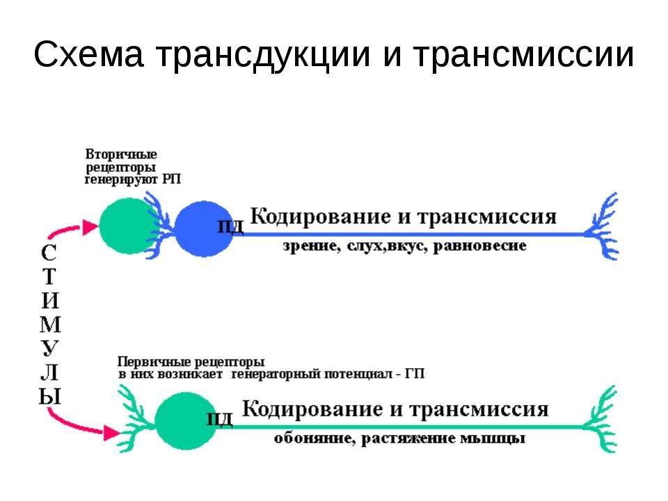 Схема трансдукции и трансмиссии