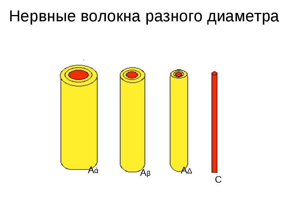 Нервные волокна разного диаметра Аά Аβ АΔ С