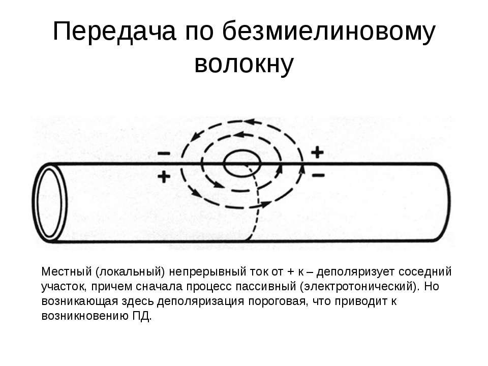 Передача по безмиелиновому волокну Местный (локальный) непрерывный ток от + к...
