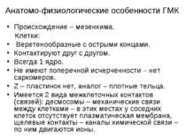 Анатомо-физиологические особенности ГМК Происхождение – мезенхима. Клетки: Ве...