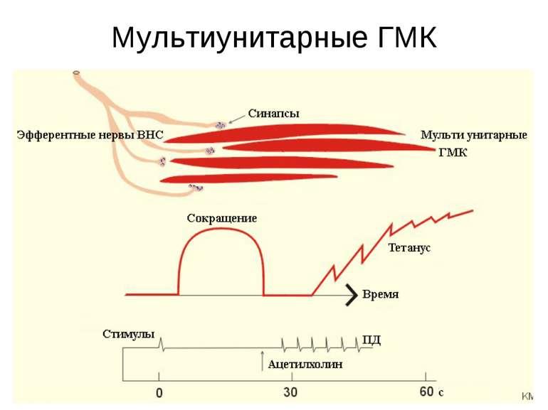 Мультиунитарные ГМК