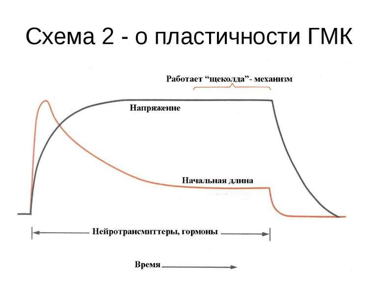 Схема 2 - о пластичности ГМК