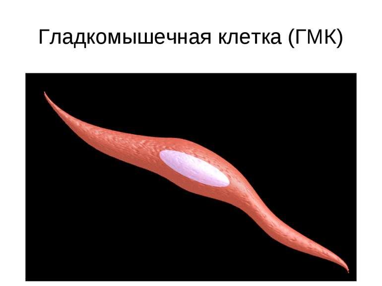 Гладкомышечная клетка (ГМК)