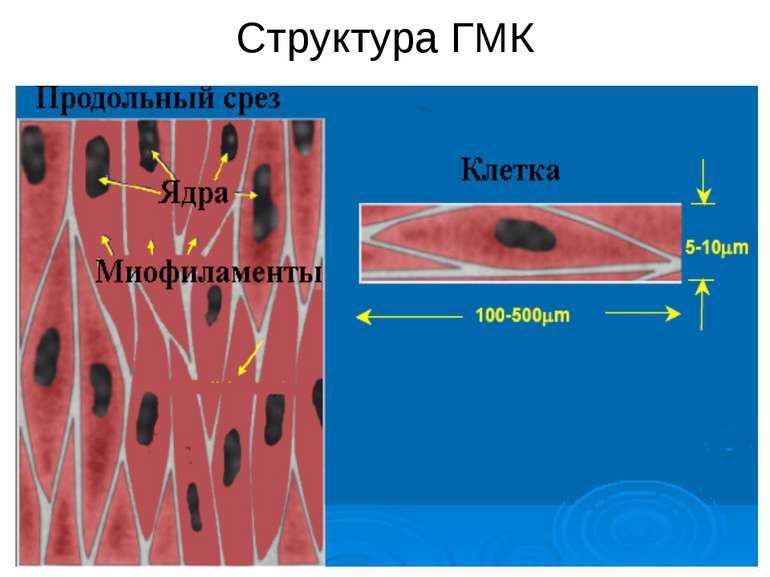 Структура ГМК