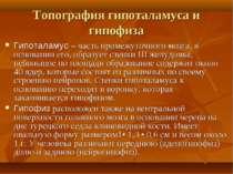 Топография гипоталамуса и гипофиза Гипоталамус – часть промежуточного мозга, ...