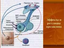 Эффекты и регуляция пролактина