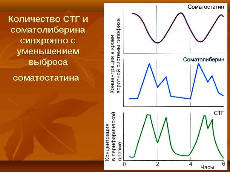 Количество СТГ и соматолиберина синхронно с уменьшением выброса соматостатина