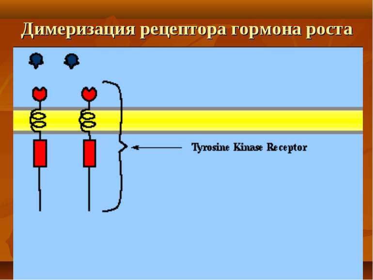 Димеризация рецептора гормона роста