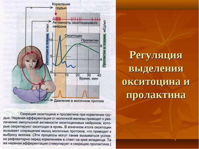 Регуляция выделения окситоцина и пролактина