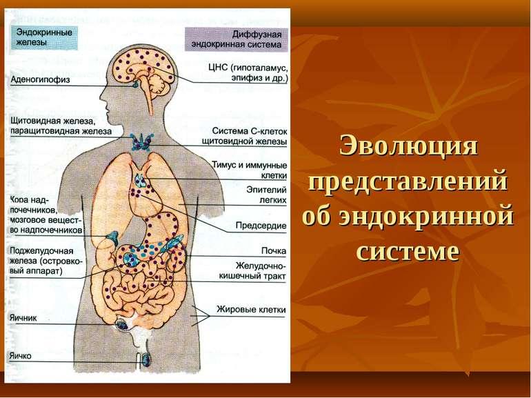 одиночные клетки диффузной эндокринной системы анатомия бинг богаты тем