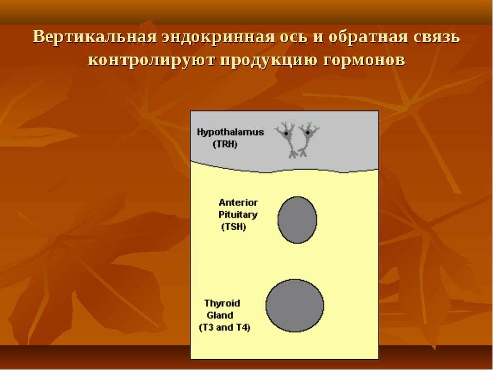 Вертикальная эндокринная ось и обратная связь контролируют продукцию гормонов