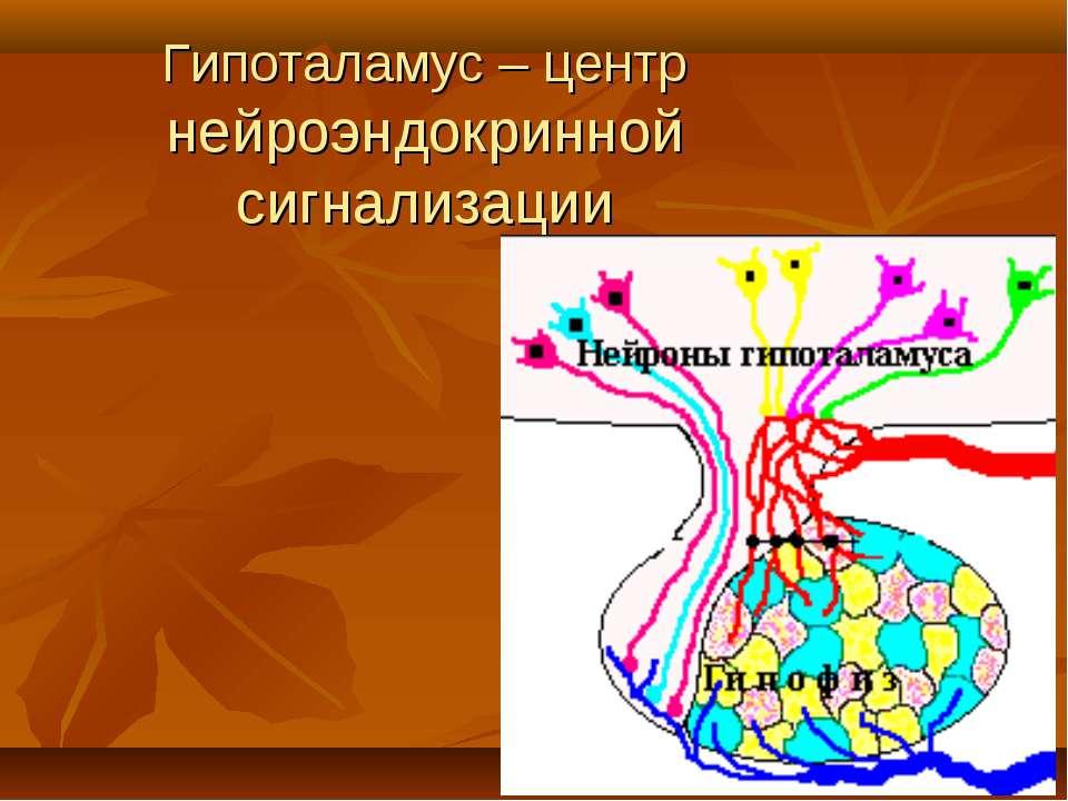 Гипоталамус – центр нейроэндокринной сигнализации