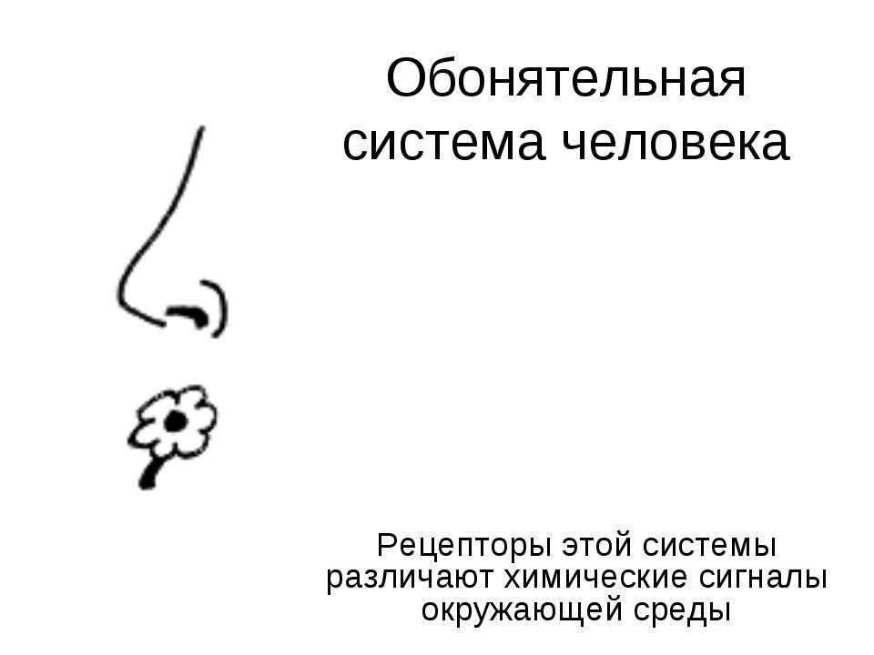 Обонятельная система человека Рецепторы этой системы различают химические сиг...
