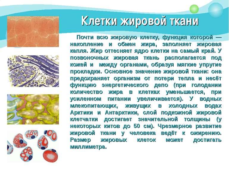 Клетки жировой ткани Почти всю жировую клетку, функция которой — накопление и...