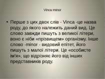 Vinca minor Перше з цих двох слів - Vinca -це назва роду, до якого належить д...