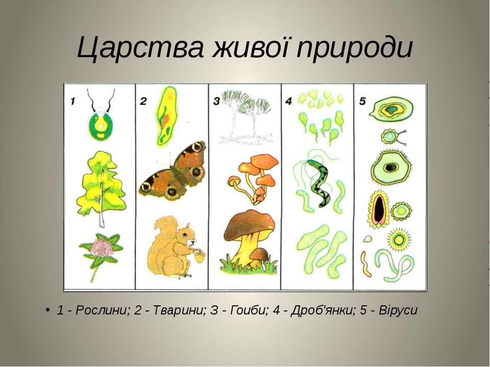 Царства живої природи 1 - Рослини; 2 - Тварини; З - Гоиби; 4 - Дроб'янки; 5 -...