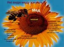 Які види меду існують? Мед Квітковий (нектар) Монофлорний ( з одного виду рос...