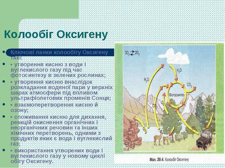 Колообіг Оксигену Ключові ланки колообігу Оксигену такі: • утворення кисню з ...