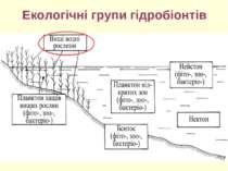 Екологічні групи гідробіонтів