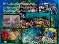 Бентос Бентос - організми, які мешкають на поверхні або в товщі дна водойм (ф...