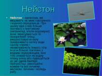Нейстон Нейстон - організми, які мешкають на межі повітряного і водного серед...