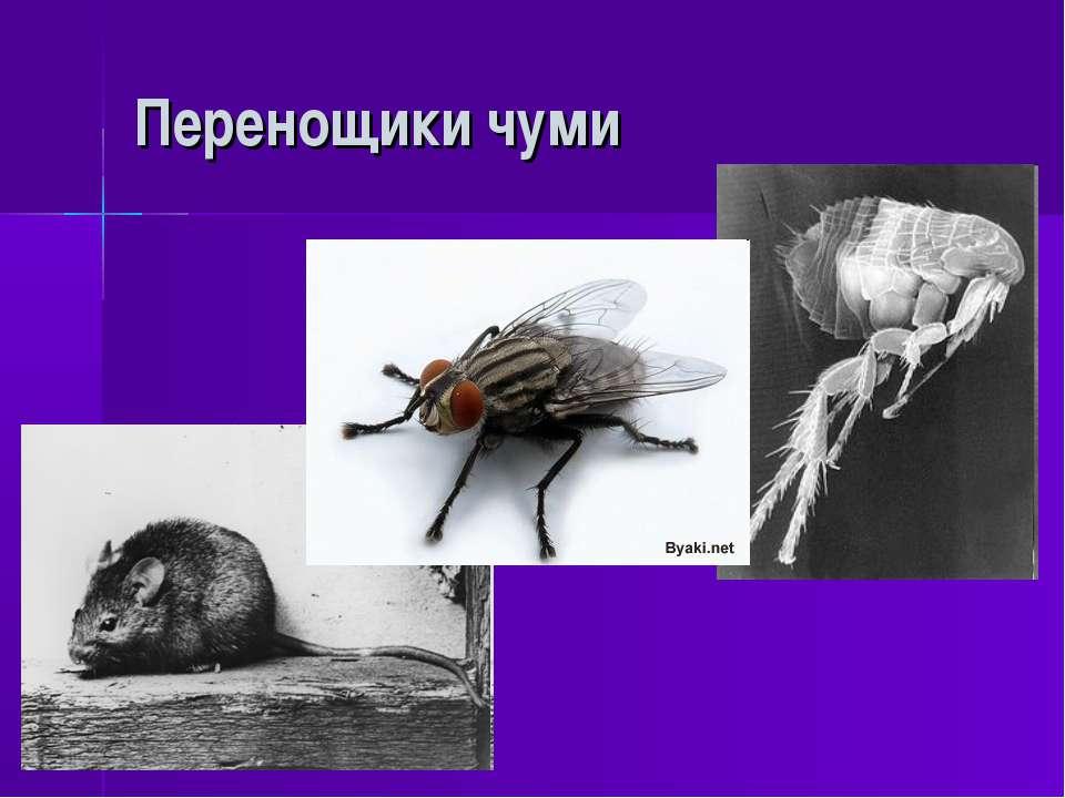 Перенощики чуми