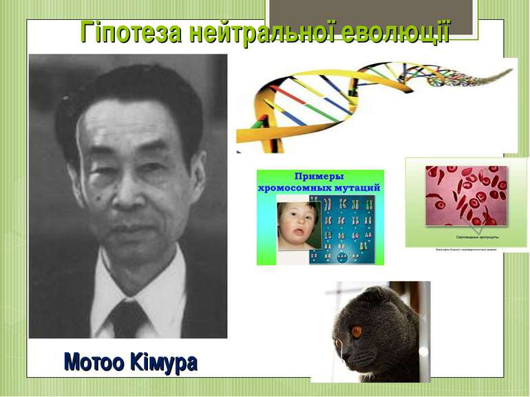 Гіпотеза нейтральної еволюції Мотоо Кімура