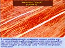 В саркоплазмі кардіоміоцитів, розташованих переважно за ходом веноз- ного кол...