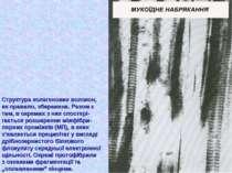 Структура колагенових волокон, як правило, збережена. Разом з тим, в окремих ...