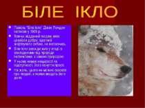 """Повість """"Біле Ікло"""" Джек Лондон написав у 1906 р. Вовчук відданий людям, вміє..."""