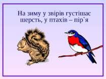 На зиму у звірів густішає шерсть, у птахів – пір`я